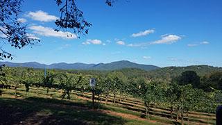 Kaya Vineyard and Winery