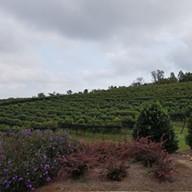Yohnah-Vineyard-and-Winery-3
